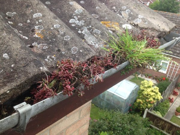 Gutter Clearance - Before